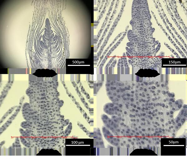 【面白グッズ】驚異のスマホ用顕微鏡「iMicro」最大倍率800倍!