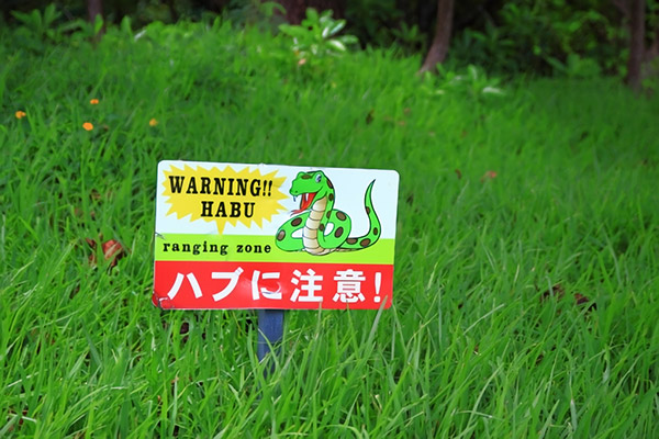 【副業】奄美諸島では「ハブ」を買い取ってもらって暮らせるって本当?