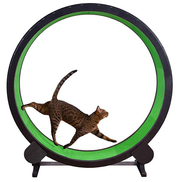 【Amazon】で購入できる世界のオモシロ「猫」グッズ BEST 5