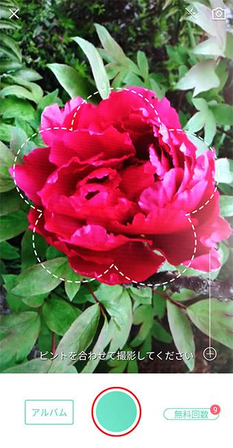 スマホのカメラで花を撮るだけで花の名前を教えてくれるアプリが欲しい!