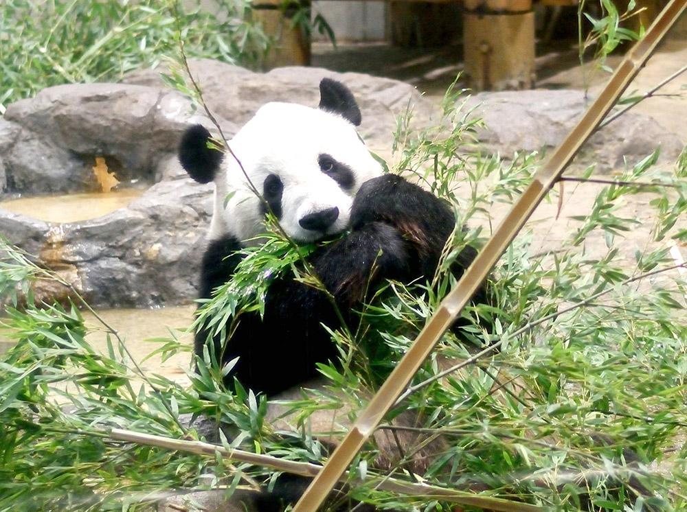上野動物園が無料になる日って1年で何日くらいあるの?