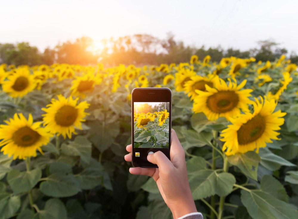 【iPhone】背景をボカし被写体をより際立たせた美しい写真を撮りたい!