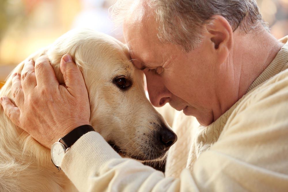 愛犬やネコに遺産を相続させることはできる? 相続はできないが使うことは可能?
