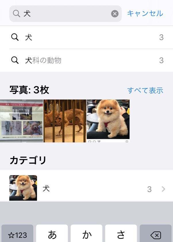 iPhone端末内の写真、画像を検索する便利技まとめ あの写真どこいったっけ……